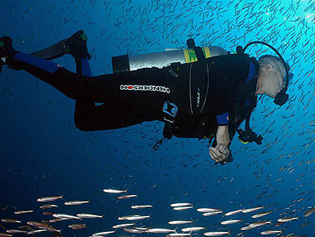 diver swimming among a school of fish