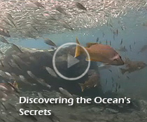 Discovering the Ocean's Secrets